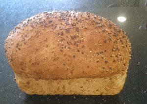 Maya brood